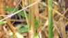 Bamboo Kimmei